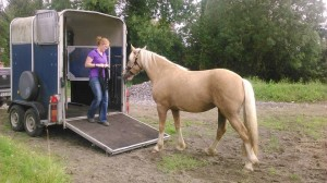 Horse Loading
